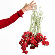 Mature Adult Photos - Red bouquet by Bernard Jaubert