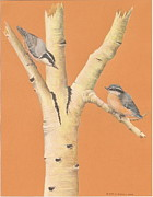 Gina Gahagan Metal Prints - Red-Breasted Nuthatches on Aspen Metal Print by Gina Gahagan