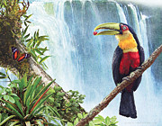 R christopher Vest - Red Breasted Toucan At...