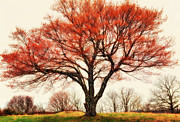 Home Prints Digital Art - Red Bud Tree - Blue Ridge Parkway I by Dan Carmichael