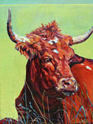Steer Framed Prints - Red Bull Framed Print by Patricia A Griffin