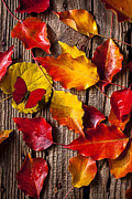 Autumn Leaf Photos - Red Butterfly In Autumn Leaves by Garry Gay