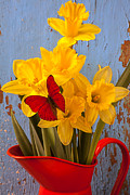 Yellows Prints - Red Butterfly On Daffodils Print by Garry Gay
