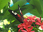Perched Art - Red Butterfly on Red Flowers by Mario  Perez