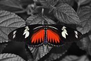 Fly Art - Red butterfly by Sumit Mehndiratta