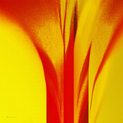 All - Red Calla Lily Against The Sun by Andee Photography