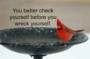 Carolyn Pettijohn - Red Cardinal says -...