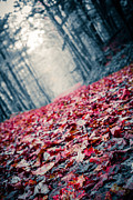 Autumn Foliage Photo Posters - Red Carpet Poster by Edward Fielding