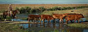 Red Cattle Print by Diane Bohna