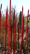 Sandra Durning - red Chihuly spikes