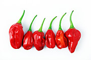 William Voon Metal Prints - Red Chillies Metal Print by William Voon