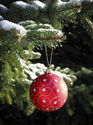 Bauble Framed Prints - Red Christmas ball on fir tree Framed Print by Elena Elisseeva