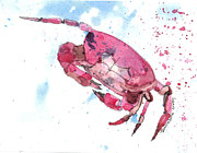 Bernadette Crotty - Red Crab