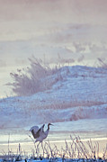 Natural Focal Point Photography - Red Crowned Crane 2