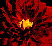 Olivia Hardwicke - Red Dahlia Abstract