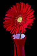 Garry Gay - Red Daisy In Red Vase