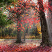 Red Leaves Photos - Red Dawn Square by Bill  Wakeley