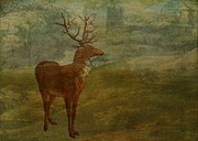 Sarah Vernon - Red Deer Stag Looking...