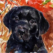 Black Lab Puppy Paintings - Red Delicious by Molly Poole