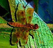 Barbara Drake Mixed Media Prints - Red Dragonfly Print by Barbara Drake