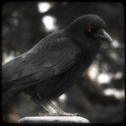 Red Eye Metal Prints - Red Eye Metal Print by Gothicolors And Crows