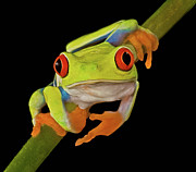 Red Eye Metal Prints - Red Eye Tree Frog Metal Print by Susan Candelario