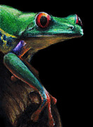 Amphibians Pastels - Red-eyed Tree Frog by David Joffe
