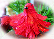 Cynthia Guinn - Red Feathers