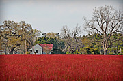 Sour Metal Prints - Red Field Metal Print by Linda Brown