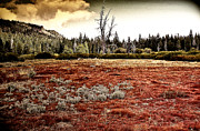 Carolyn Marchetti - Red Fields Of Tahoe