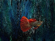Blue Art Art - Red Fin Fish by Mario  Perez