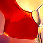 Macro Photos Glass Art - Red Fish by Omaste Witkowski