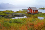Lofoten Islands Posters - Red fishing hut near digermulen Poster by Heiko Koehrer-Wagner