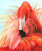 Beach Drawings Prints - Red Flamingo Print by Carla Kurt