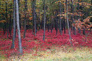 Jeff Holbrook Art - Red Floor Forest by Jeff Holbrook