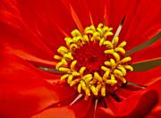 Red Flower Print by Eva Kondzialkiewicz