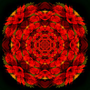 Mandala Art - Red Flower by Niels Vaillant