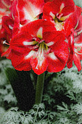 Gardens And Flowers - Red Flower with Starburst by Crystal Wightman