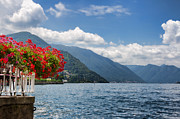 Lago Di Como Posters - Red flowers by Lake Como Italy Poster by Anna-Mari West