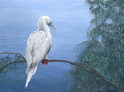 See You Painting Framed Prints - Red-Footed Booby Framed Print by Dorothea Hyde