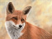 Rachel Stribbling - Red Fox Painting