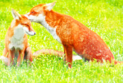 Marian Cates Metal Prints - Red Foxes II Metal Print by Marian Cates