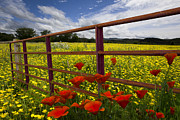 Yellow Prairie Photos - Red Gate by Debra and Dave Vanderlaan