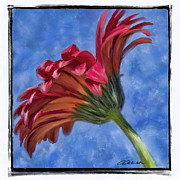 Invitations Mixed Media Framed Prints - Red Gerbera Framed Print by Andrea Auletta