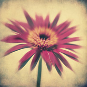 Texture Flower Metal Prints - Red Gerbera Metal Print by Angela Doelling AD DESIGN Photo and PhotoArt
