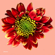 Blooming Digital Art - Red Gerbera Daisy Painting by Nadine and Bob Johnston