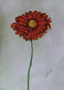 Gerbera Drawings - Red Gerbera by Marcia Weller-Wenbert