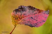 LeeAnn McLaneGoetz McLaneGoetzStudioLLCcom - Red Glorry of Fall