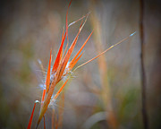 Sympathy Metal Prints - Red Grass Metal Print by Mary Zeman