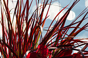 Turf Art - Red Grass White Light 1 - Featured 3 by Alexander Senin